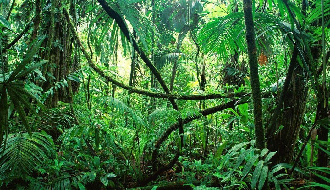 Dschungel Camp Insekten Wie Im Dschungel Essen Jeder