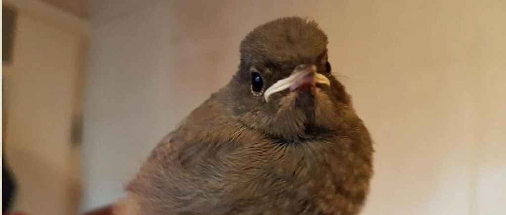 »Kleine Vögel im Gras sitzen lassen« – warum »Ästlinge« keine Hilfe brauchen