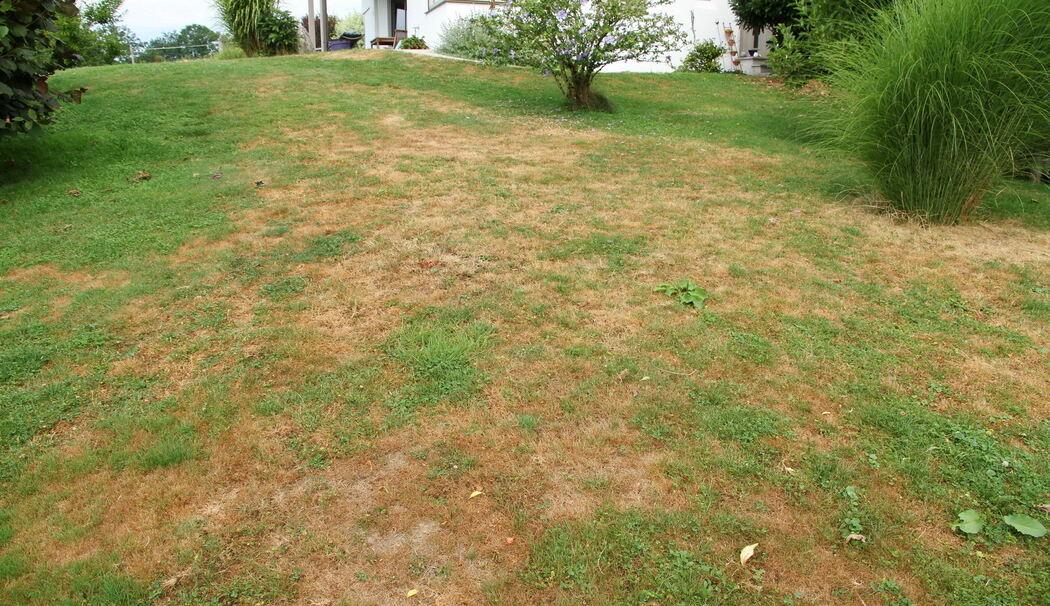 Schwarze Stellen Im Rasen