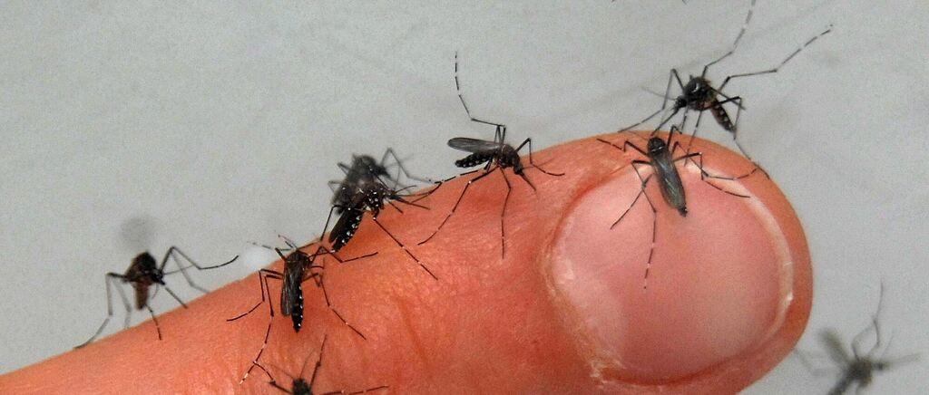 Stechmückenplage 2021