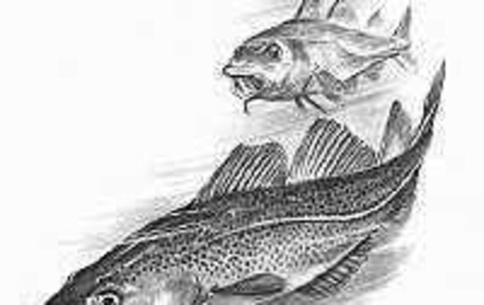 Fische sind intelligenter als bisher vermutet - Chiemgau Blätter ...